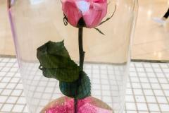 Enchanted-Rose-1