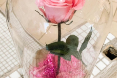 Pink real rose within a glass dome with fallen petals & added glitter.